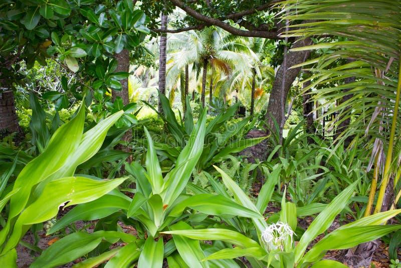 Exotischer thailändischer Garten mit Pflanzen und Bäumen asiatischen Stil stockfoto