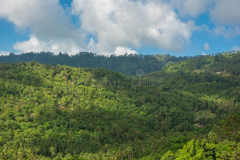 Exotischer tropischer Gebirgsregenwald von Koh Samui Island im Thailand mit Palmen und Bäumen lizenzfreies stockbild