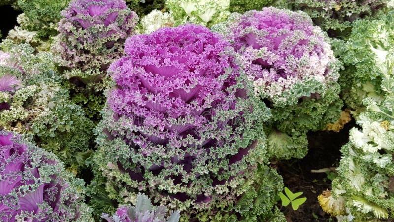 exotisk blomma royaltyfri foto