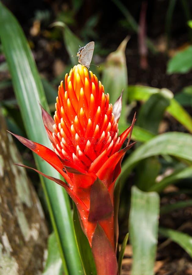 Exotisk blomma med en visiter fotografering för bildbyråer