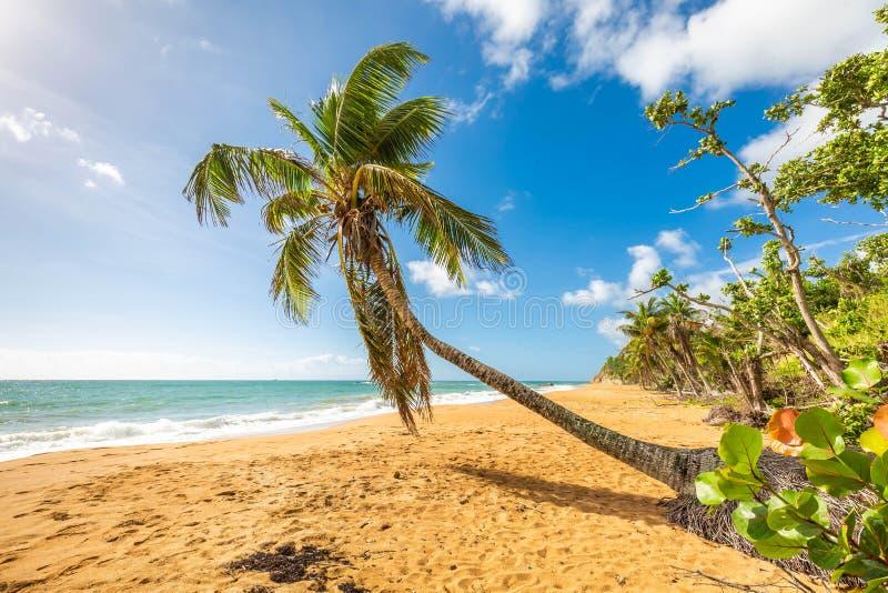 Exotisk carribean kust av den Puerto Rico Flamenco stranden arkivfoton