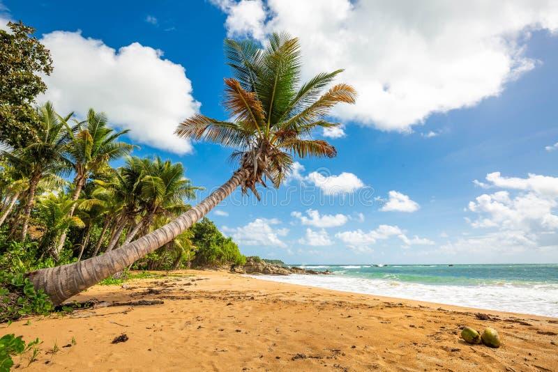 Exotisk carribean kust av den Puerto Rico Flamenco stranden arkivbild
