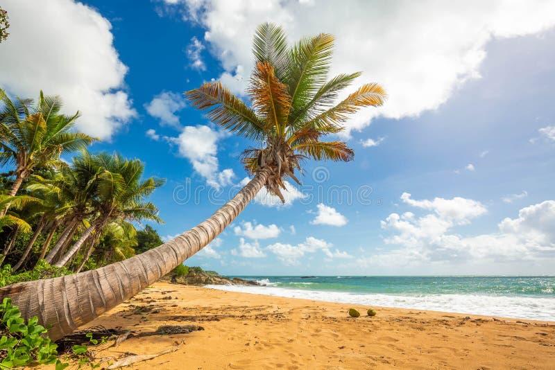 Exotisk carribean kust av den Puerto Rico Flamenco stranden arkivfoto