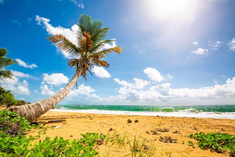 Exotisk carribean kust av den Puerto Rico Flamenco stranden arkivbilder