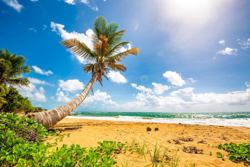 Exotisk carribean kust av den Puerto Rico Flamenco stranden fotografering för bildbyråer