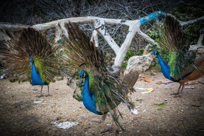 Exotisk fågel arkivbild