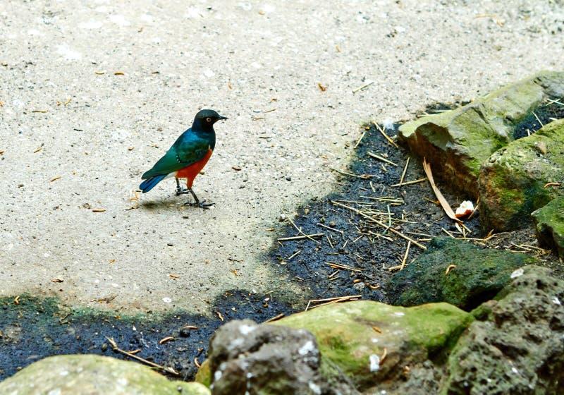 Exotisk fågel i tropisk djungel juli fotografering för bildbyråer