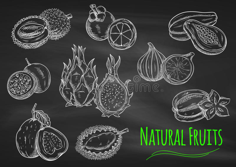 Exotisk fruktkrita skissar på svart tavla royaltyfri illustrationer