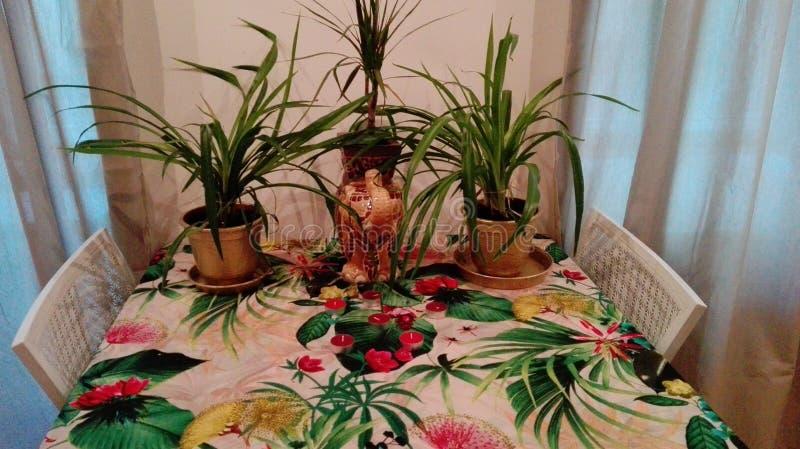 Exotisk hem- dekor royaltyfri foto