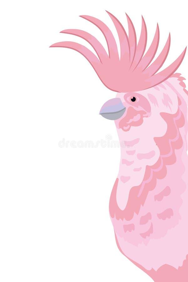 Exotisk och tropisk fågel för kakadua stock illustrationer