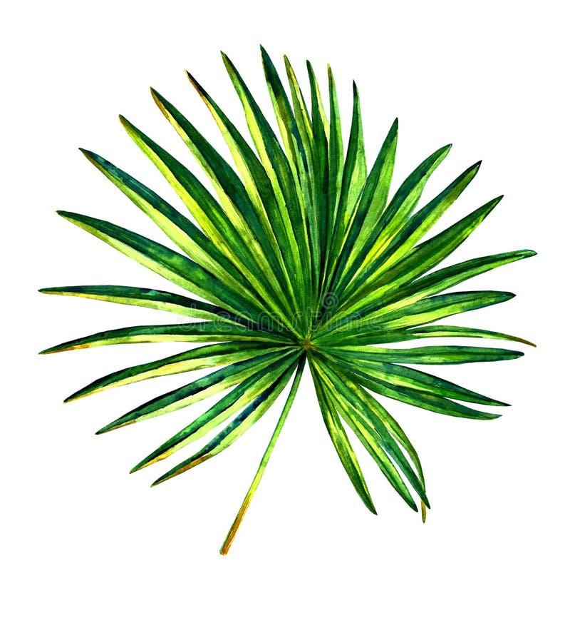 Exotisk palmblad stock illustrationer