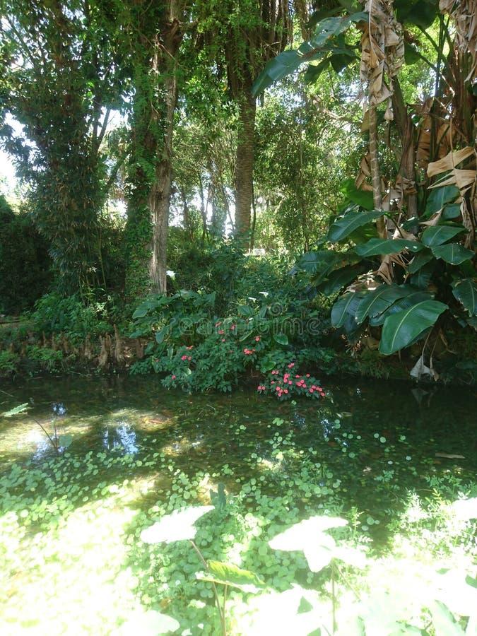 Exotisk parc arkivfoton