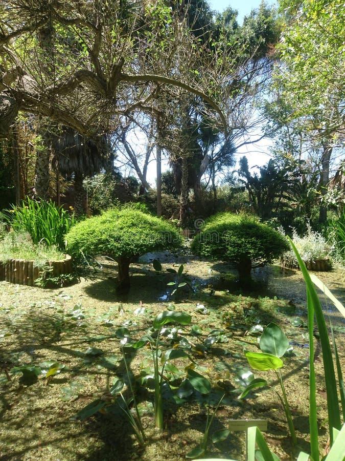 Exotisk parc royaltyfria bilder