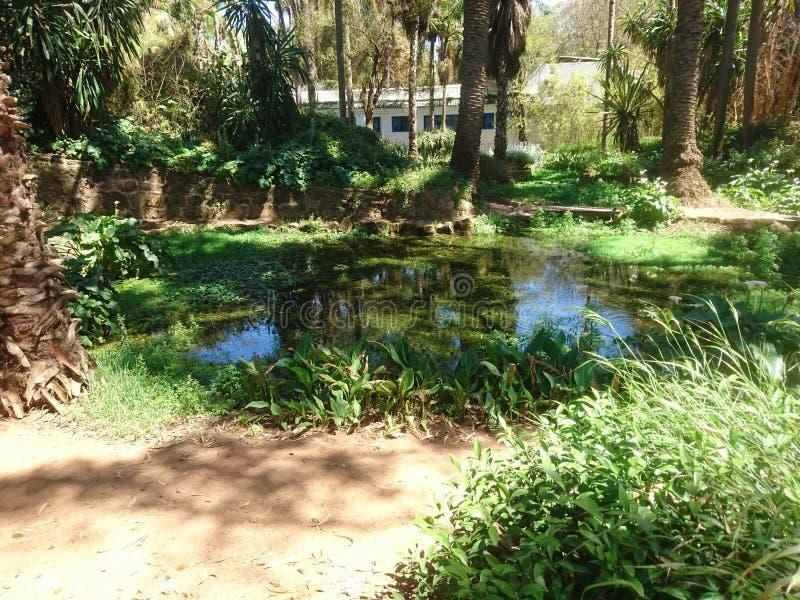 Exotisk parc royaltyfri foto