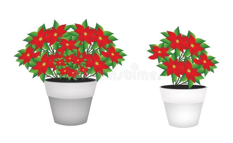 Exotisk röd julstjärnablomma i blomkruka vektor illustrationer