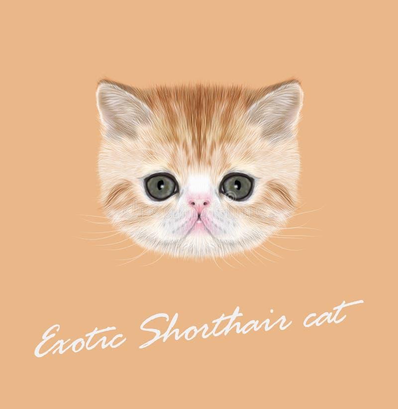Exotisk shorthairkattunge stock illustrationer