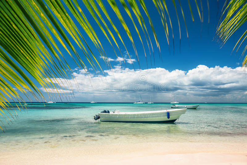 Exotisk strand i Dominikanska republiken arkivfoto