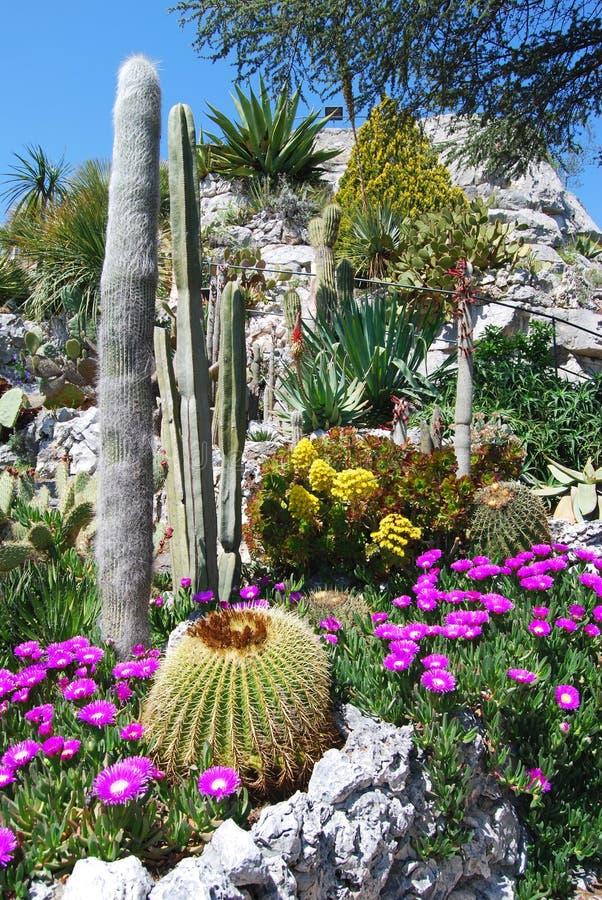 exotisk trädgård royaltyfri fotografi