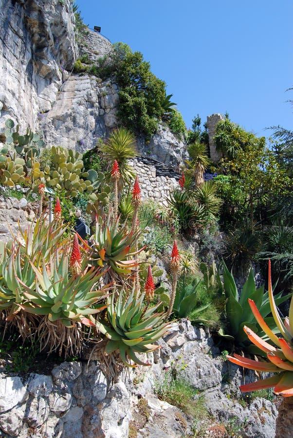 exotisk trädgård arkivfoto