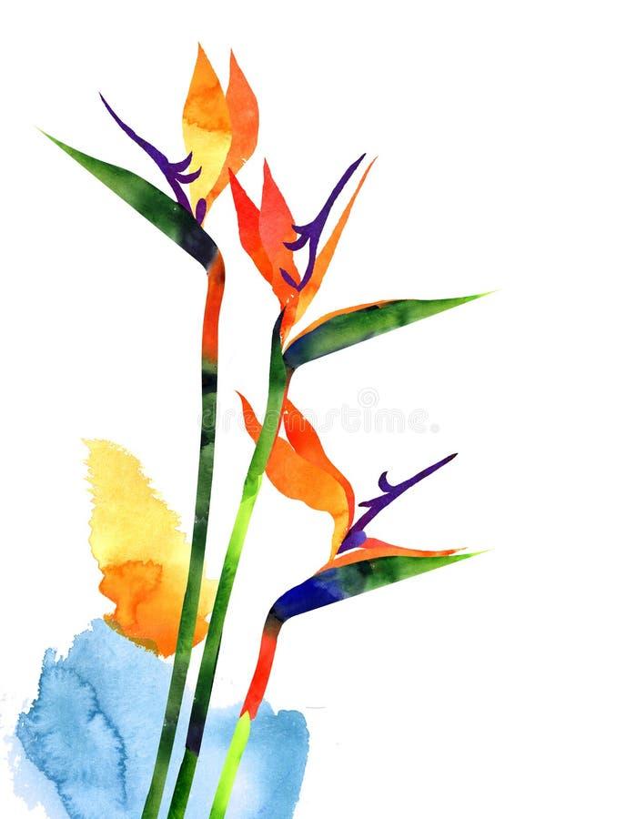 Exotisk tropisk blomma för vattenfärg, strelitzia på vitbakgrund stock illustrationer