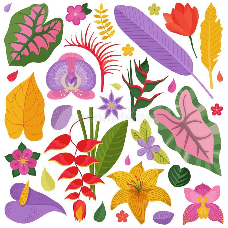 Exotisk tropisk blomma- och sidasamling vektor illustrationer
