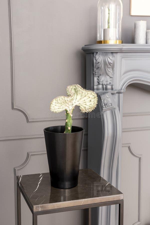 Exotisk växt i en svart kruka på en tabell i ett grått rum med väggen arkivbilder