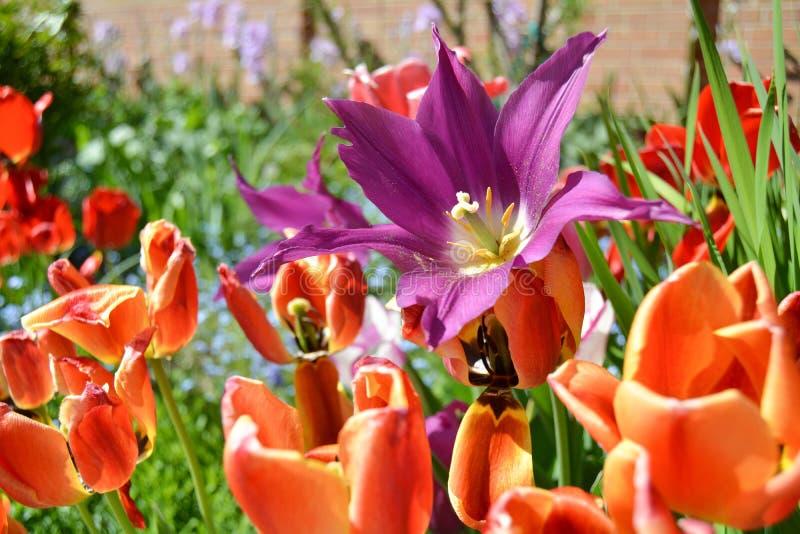 exotiska blommor arkivfoton
