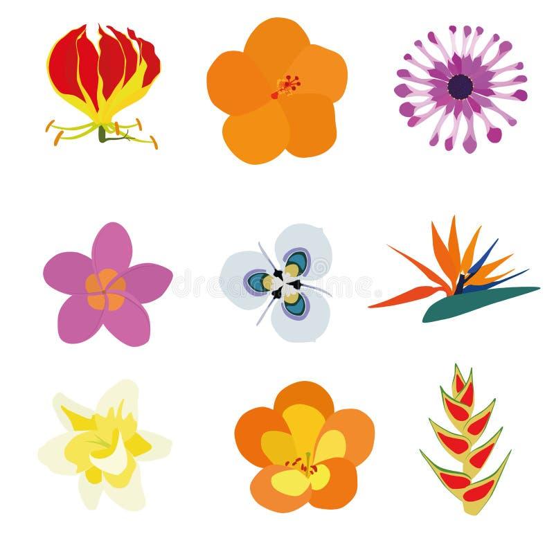 exotiska blommor vektor illustrationer