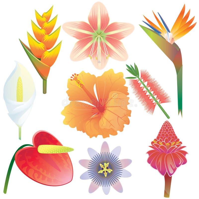exotiska blommor för samling royaltyfri illustrationer