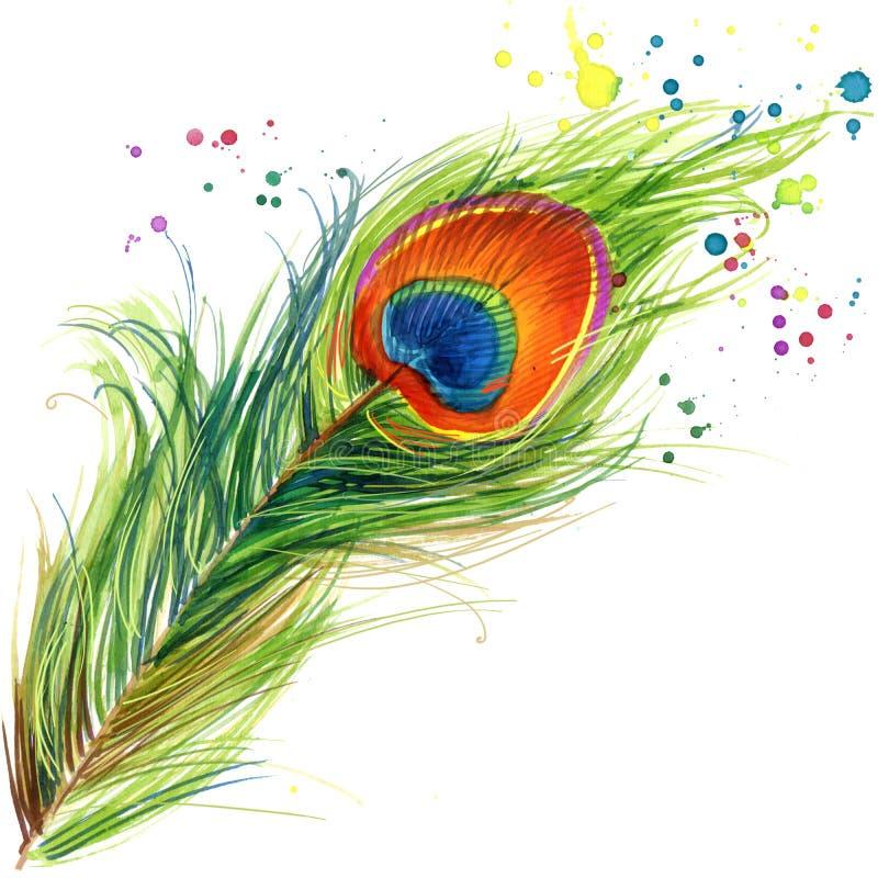 Exotiska diagram för påfågelfjäderT-tröja påfågelillustration med texturerad bakgrund för färgstänk vattenfärg vektor illustrationer