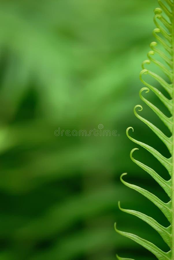 exotiska ferns arkivfoto