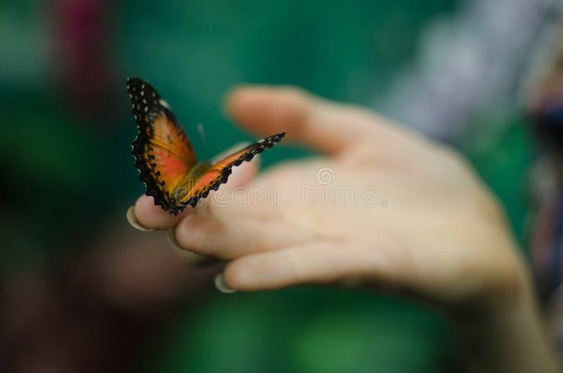 exotiska fjärilar royaltyfri bild