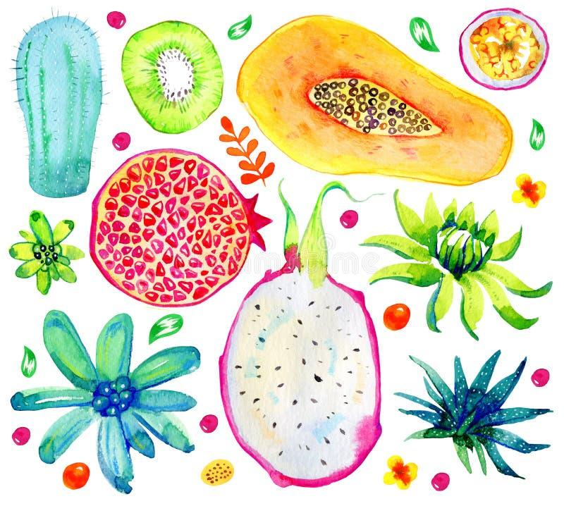 Exotiska frukter, suckulenter och dekorativa blommor Granatäpple kiwi, papaya, passionfrukt Hand dragen vattenfärguppsättning stock illustrationer