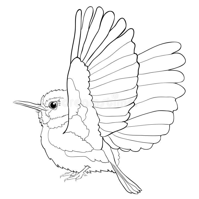 Exotiska kubanska färga Tody Bird också vektor för coreldrawillustration royaltyfri illustrationer