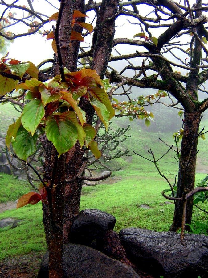 exotiska monsoons fotografering för bildbyråer