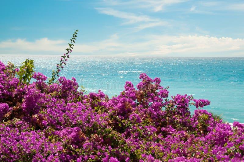 Exotiska rosa färgblommor och hav royaltyfria bilder