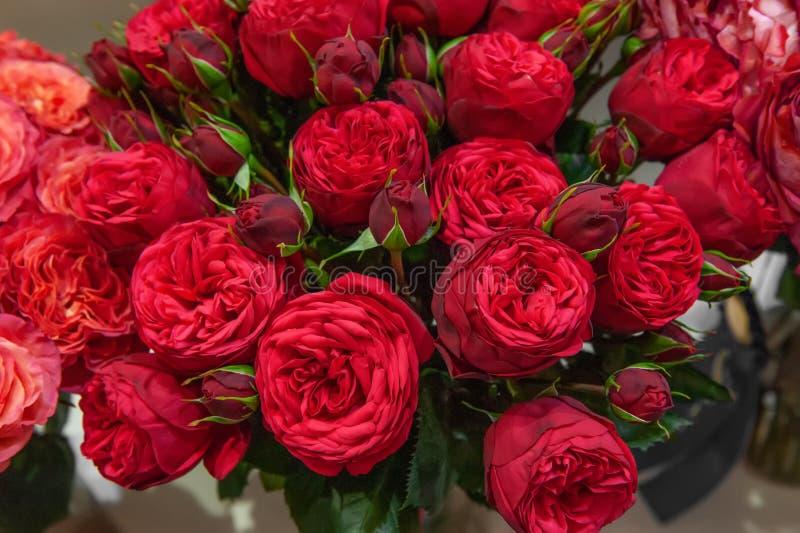 Exotiska rosor från moderna variationer för scharlakansröd röd elit i buketten som en gåva Bakgrund fotografering för bildbyråer