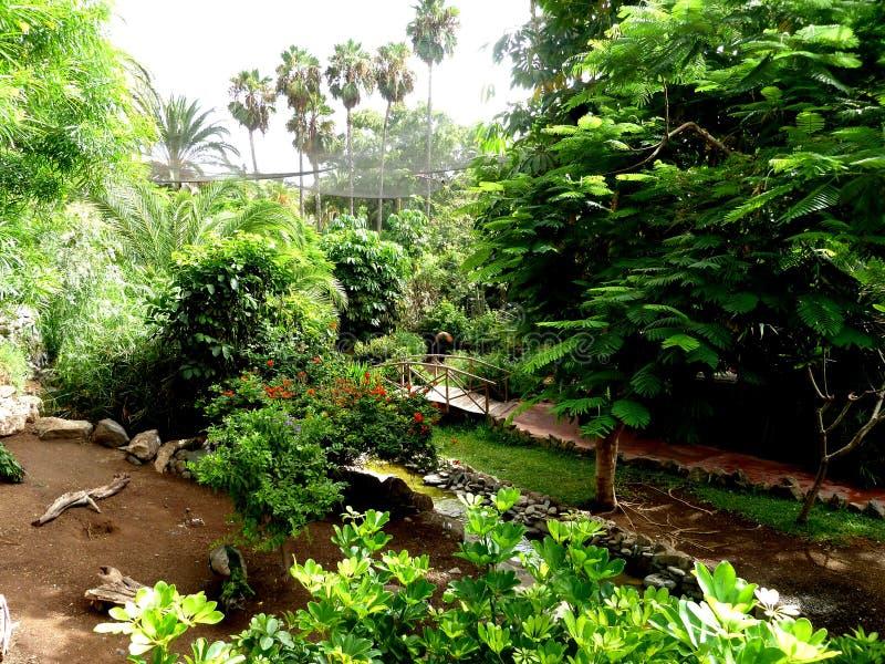 Exotiska växter arbeta i trädgården på palmitos parkerar granen canaria, Spanien royaltyfria foton