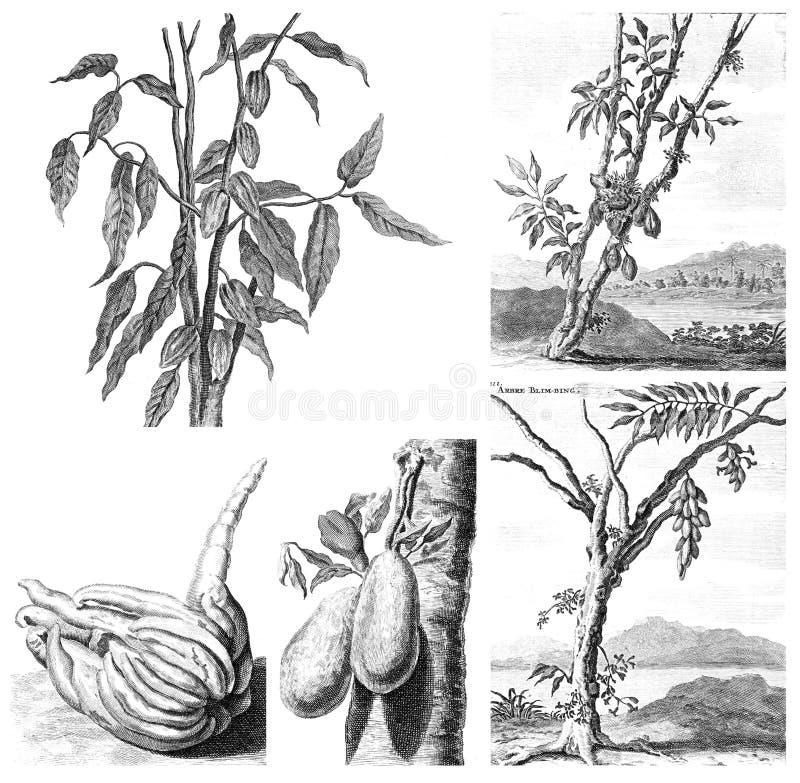 Exotiska växter för flora på vit bakgrund royaltyfri illustrationer