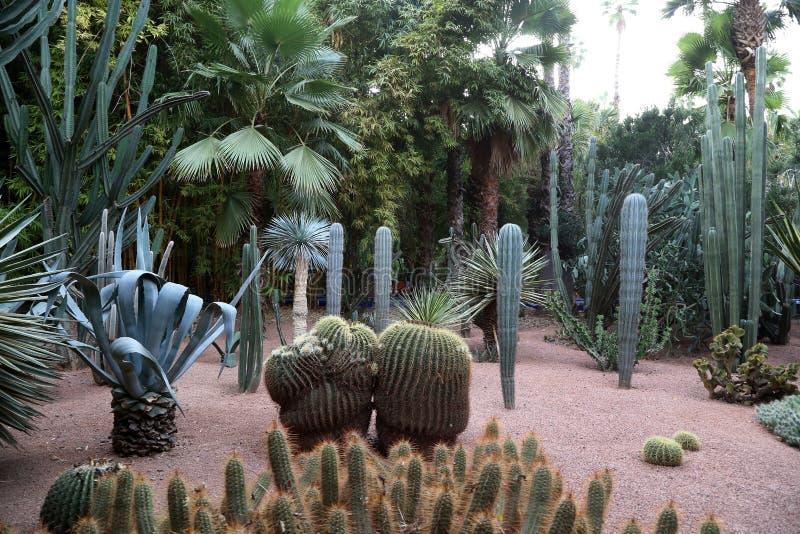 Exotiska växter i trädgården av Majorelle arkivbilder