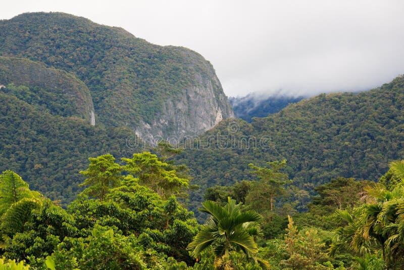 Exotiskt rainforestlandskap arkivfoton