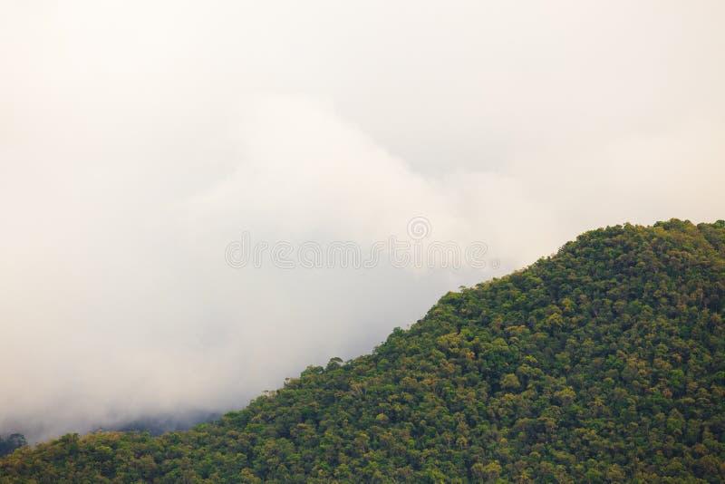 Exotiskt rainforestlandskap fotografering för bildbyråer