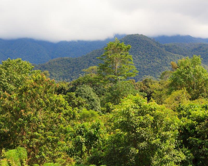 Exotiskt rainforestlandskap arkivbilder
