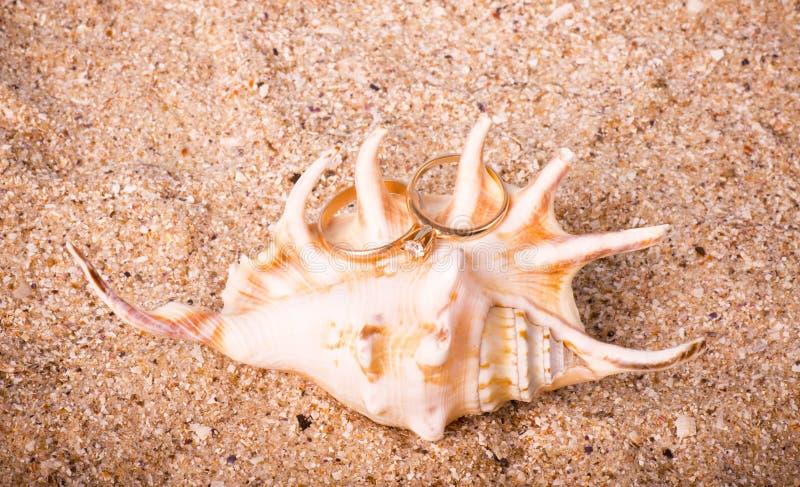 exotiskt sandskal för bakgrund royaltyfri fotografi