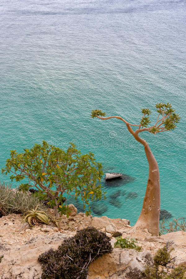Exotiskt träd på havsbakgrund fotografering för bildbyråer