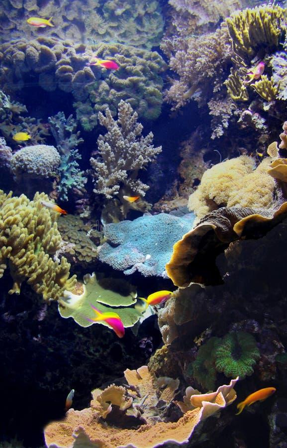 Exotiskt undervattens- havsliv royaltyfria foton