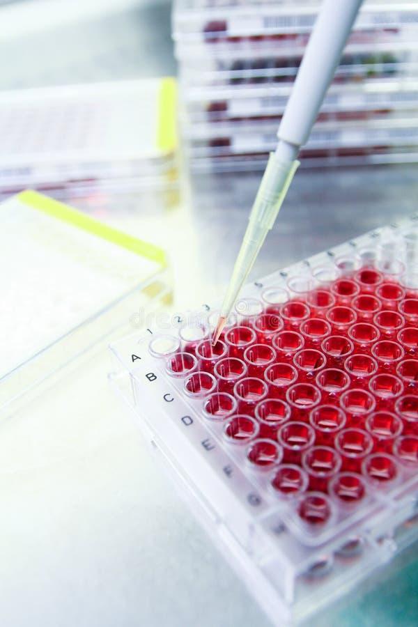 Expérience médicale de la science de biotechnologie photos stock