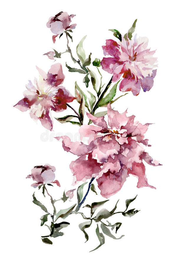 Expanded pink peonies on white background. Watercolor painting. Hand drown. Vertical orientation. Can be used in greeting cards, wallpapers, fabric, wrapping royalty free illustration