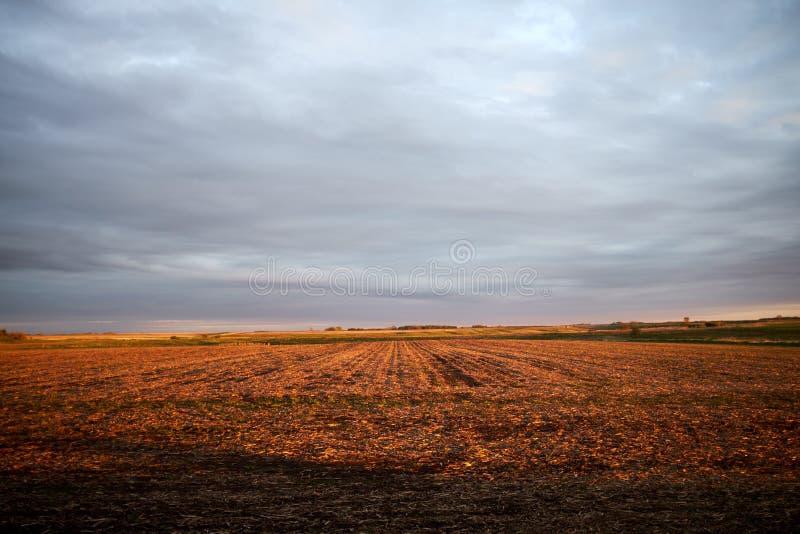 Expansivt rött fält under gråa mulna himlar arkivfoto
