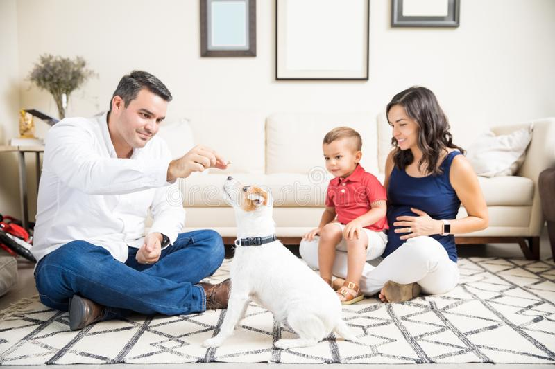 Expectant Mother And Son Looking At Man Feeding Puppy At Home. Expectant mother and son looking at men feeding puppy in living room at home stock images